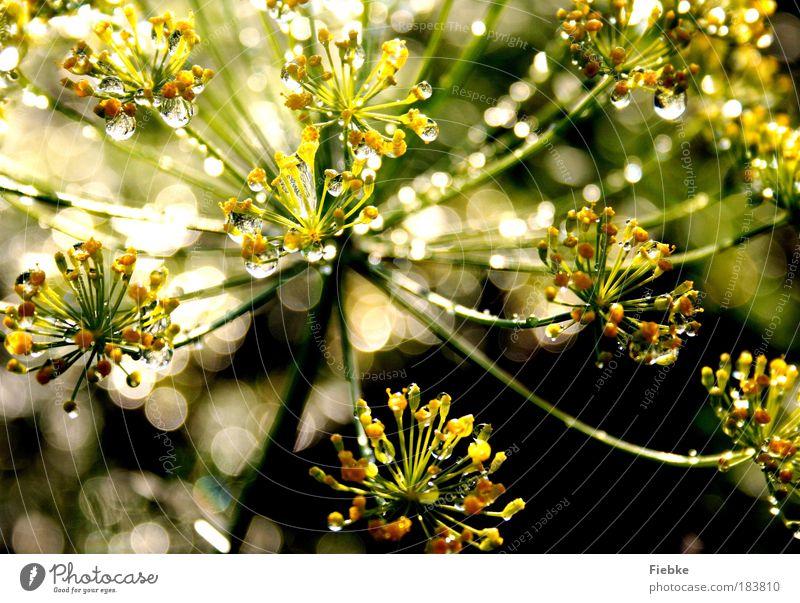 Nature Water Beautiful Flower Green Plant Summer Leaf Yellow Meadow Dream Park Rain Bright Glittering Elegant