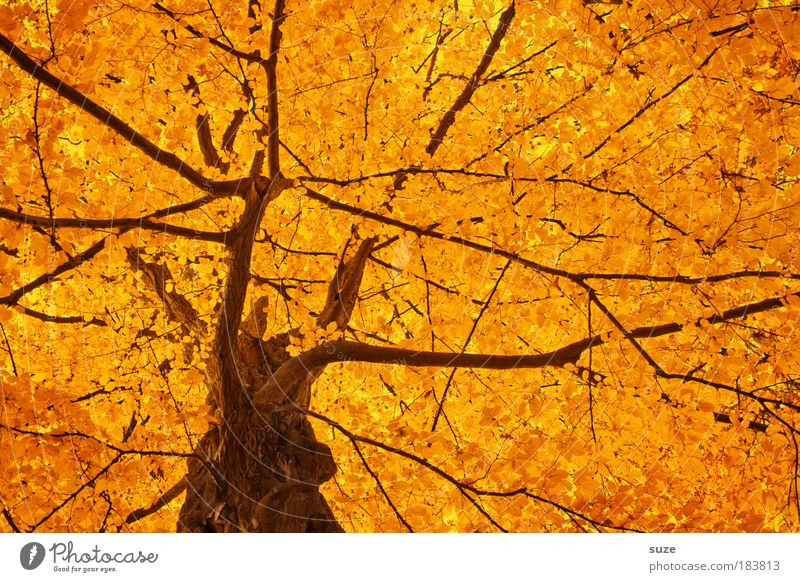 Nature Beautiful Tree Leaf Autumn Emotions Moody Environment Gold Time Multicoloured Esthetic Sunlight Seasons Tree trunk Treetop