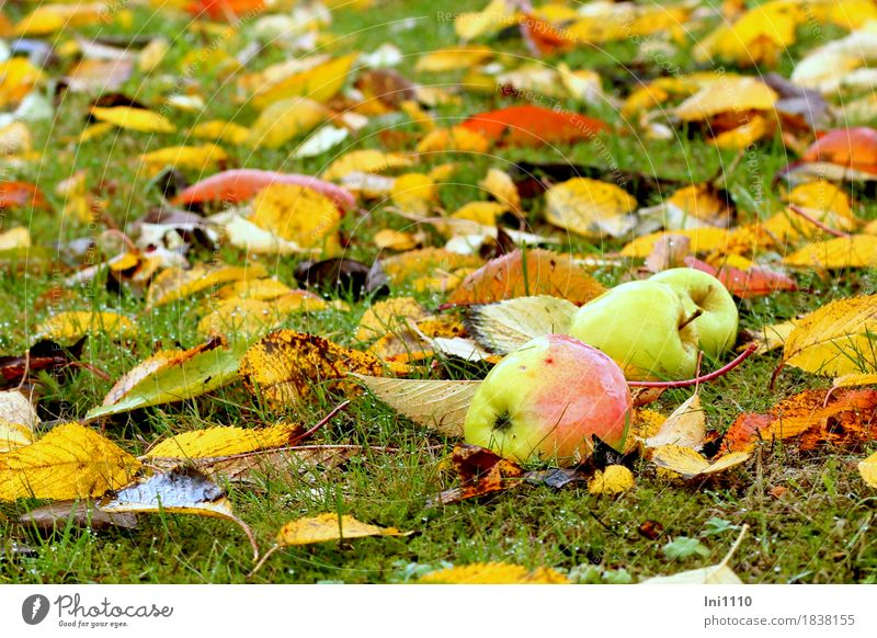 windfall Nature Plant Drops of water Autumn Bad weather Rain Leaf Garden Meadow Fresh Glittering Cold Wet Round Brown Multicoloured Yellow Gold Gray Green