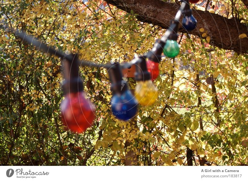 Happy Lights Decoration Lamp Nature Autumn Weather Beautiful weather Glass String Glittering Hang Illuminate Exceptional Friendliness Happiness Bright Round