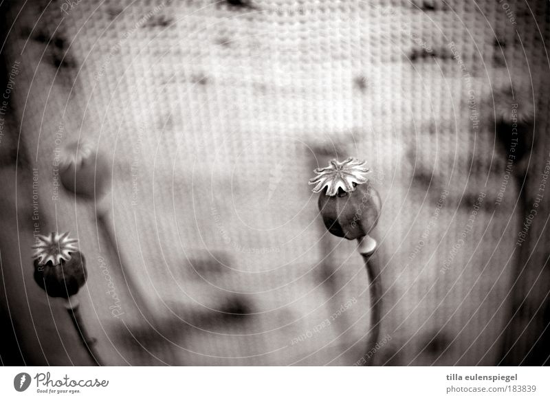 deja vu Black & white photo Exterior shot Deserted Copy Space top Neutral Background Shallow depth of field Nature Plant Faded To dry up Dark Natural Beautiful