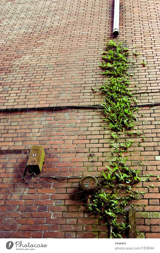 Old Green Red House (Residential Structure) Wall (building) Wall (barrier) Building Architecture Wet Facade Growth Cable Broken Wild Brick