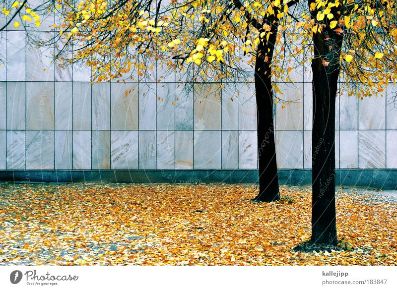 golden years Colour photo Multicoloured Deserted Day Contrast Autumn Climate Weather Tree Leaf Park Facade Change Stone slab Deciduous tree Slippery surface