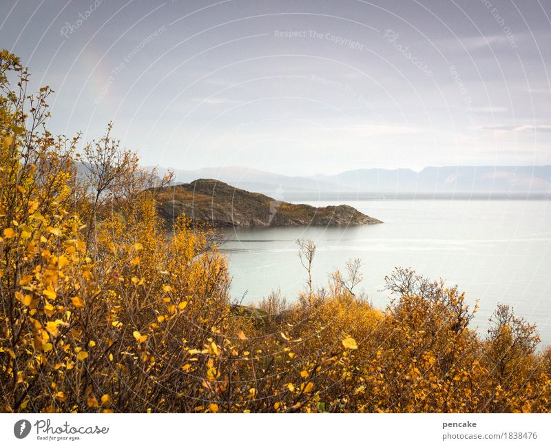 Silence is golden Nature Landscape Autumn Forest Hill Mountain Fjord Idyll Norway Skerry Autumnal colours Rainbow Fog Calm Gold Autumn leaves Colour photo