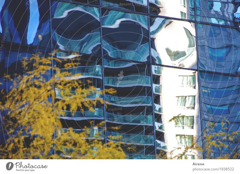 hallucination Tree Autumn leaves Town Downtown High-rise Facade Glass Exceptional Fantastic Tall Crazy Blue Yellow Bizarre Irritation Flatulence Distorted