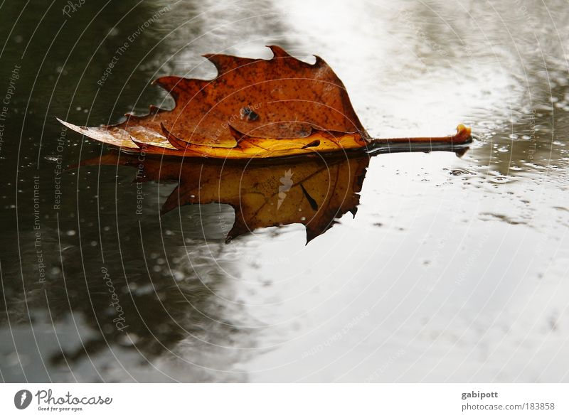 fallen leaves on the ground Colour photo Exterior shot Structures and shapes Deserted Day Reflection Shallow depth of field Nature Earth Water Autumn Weather