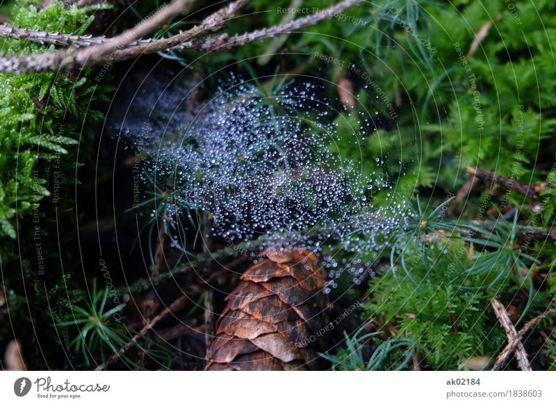 Dew drops on the spider's web on the forest floor Leisure and hobbies Vacation & Travel Trip Adventure Hiking Environment Nature Landscape Plant Animal Earth