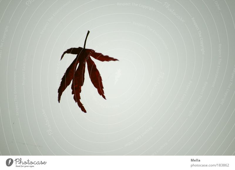 Nature Sky Plant Leaf Loneliness Autumn Gray Air Moody Flying End To fall Transience Natural Decline Dry