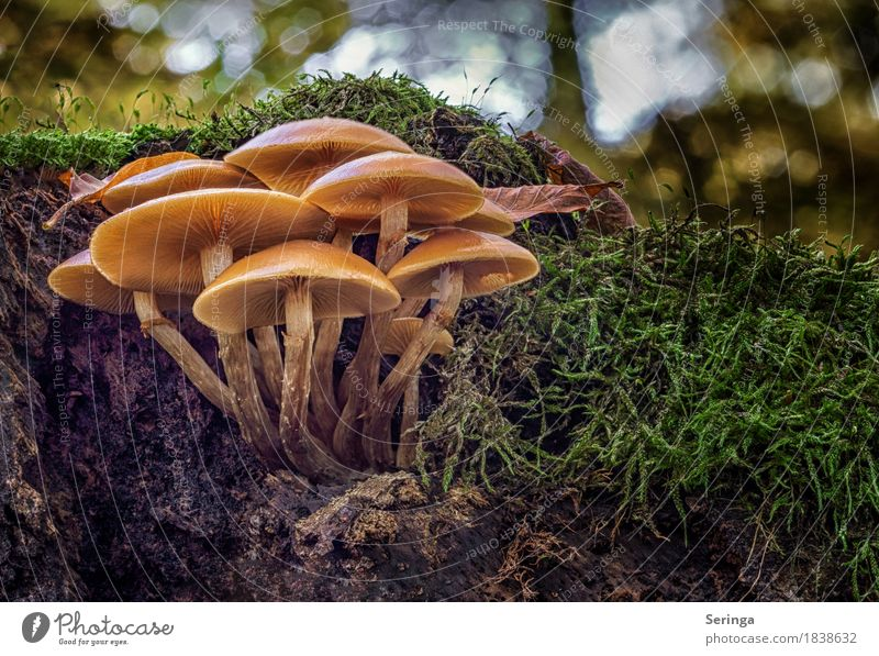 A big mushroom family Environment Nature Landscape Plant Animal Earth Autumn Moss Park Forest Growth mushroom group Mushroom Mushroom cap Beatle haircut