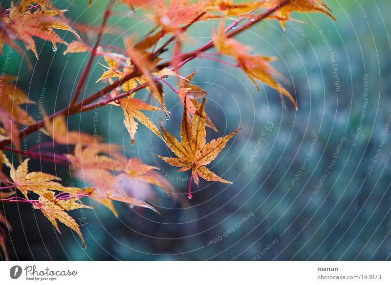 Nature Beautiful Tree Blue Plant Calm Leaf Relaxation Park Design Drops of water Gold Esthetic Bushes Change Violet
