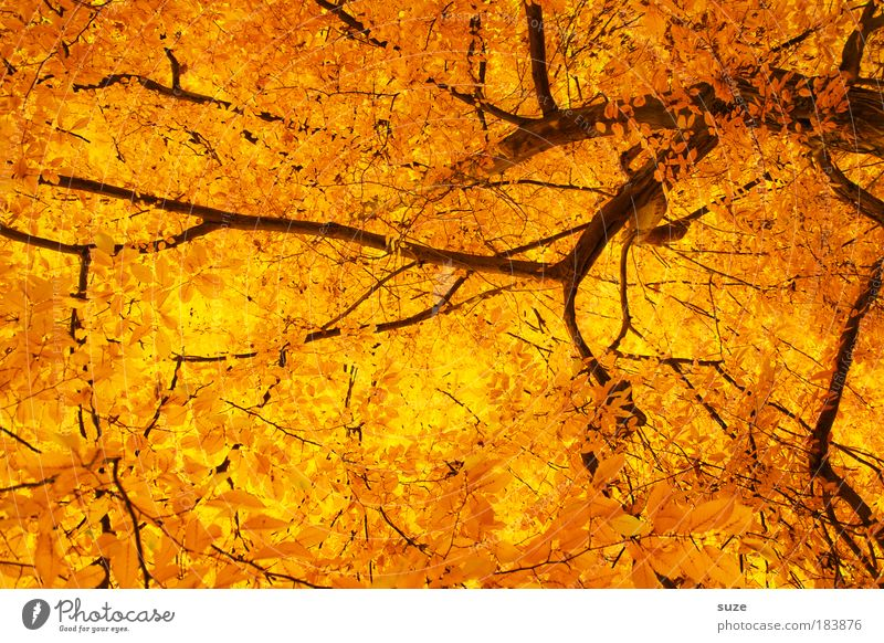 Nature Beautiful Old Tree Leaf Autumn Emotions Environment Gold Time Esthetic Structures and shapes Light Branch Exceptional Seasons