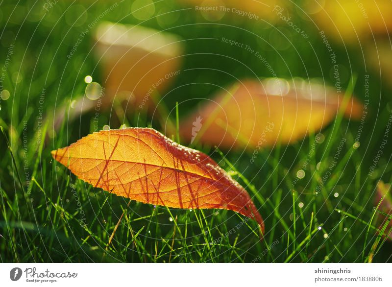 october leaves Nature Drops of water Sunlight Autumn Beautiful weather Grass Leaf Meadow Illuminate Warmth Green Orange Warm-heartedness Together Colour photo