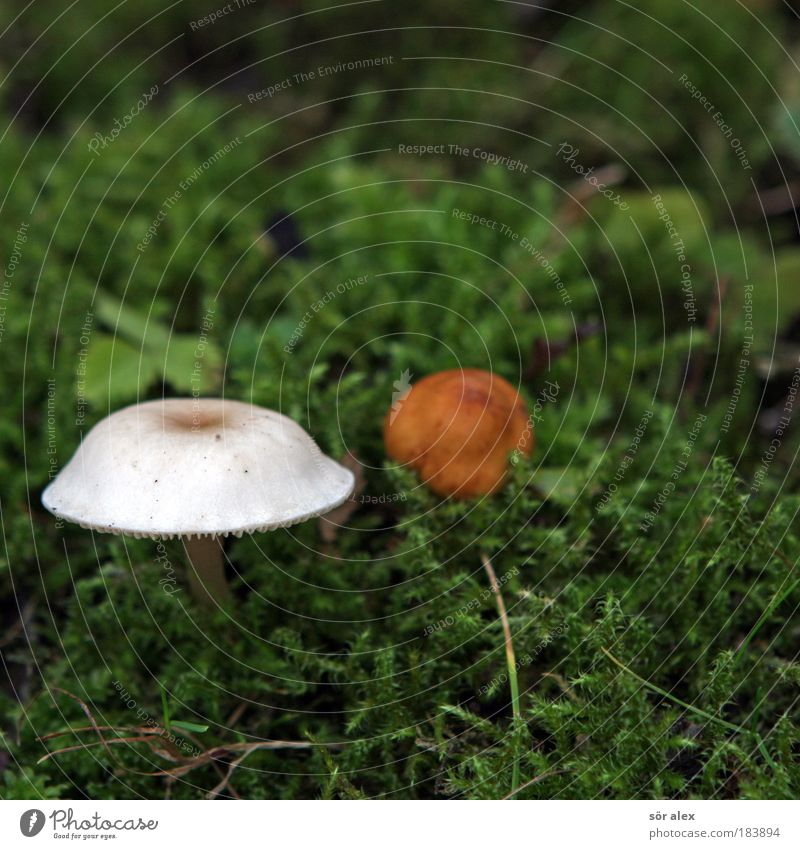 Nature Plant Green Beautiful White Animal Autumn Brown 2 In pairs Attachment Mushroom Moss Acceptance
