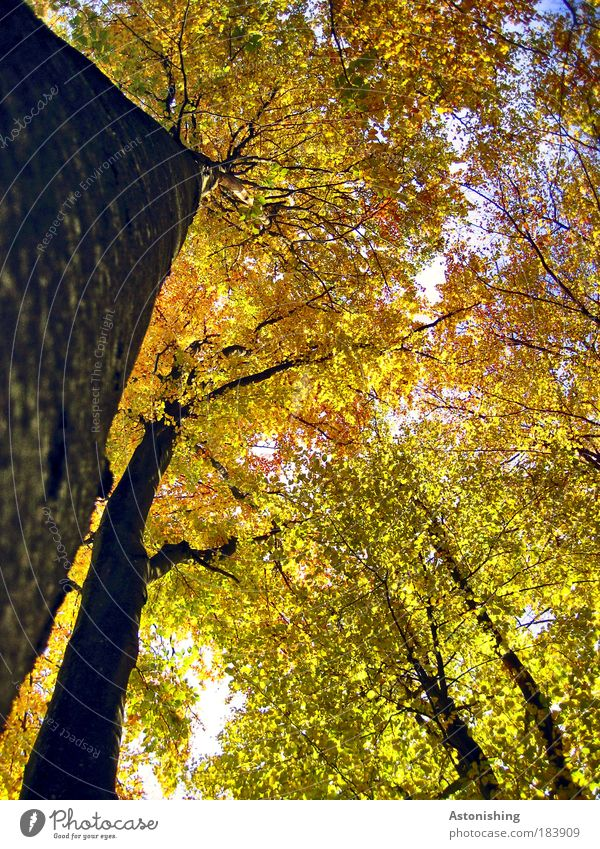Nature Tree Green Plant Leaf Black Yellow Forest Autumn Air Brown Weather Environment Gold Tall Growth