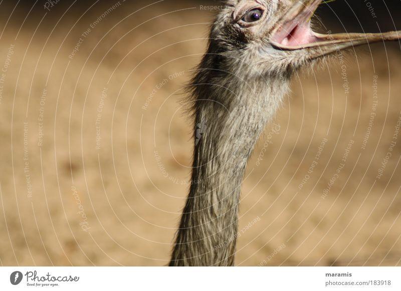 Nature Summer Black Animal Yellow Movement Brown Power Bird Speed Animal face Feather Target Thin Wild animal Appetite
