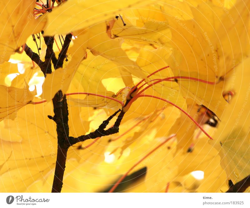 Tree Plant Leaf Black Yellow Dark Life Autumn Playing Lighting Roof Many Branch Protection Insect Versatile