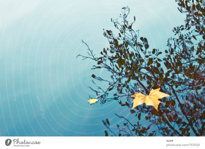 Nature Old Water Loneliness Landscape Leaf Environment Emotions Autumn Time Gold Esthetic Individual Seasons To fall Autumn leaves