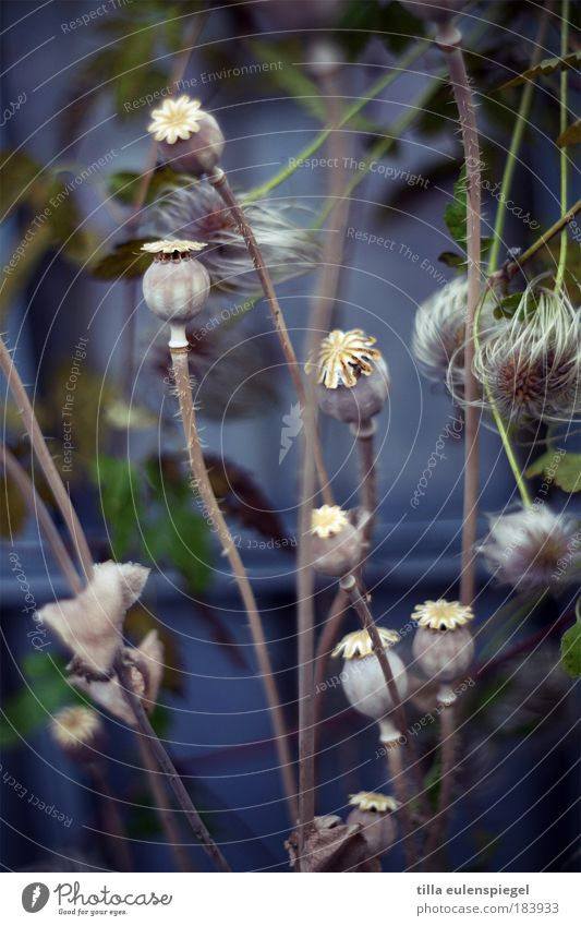 at the request of a single gentleman. Colour photo Exterior shot Deserted Copy Space bottom Day Shallow depth of field Plant Autumn Faded To dry up Natural