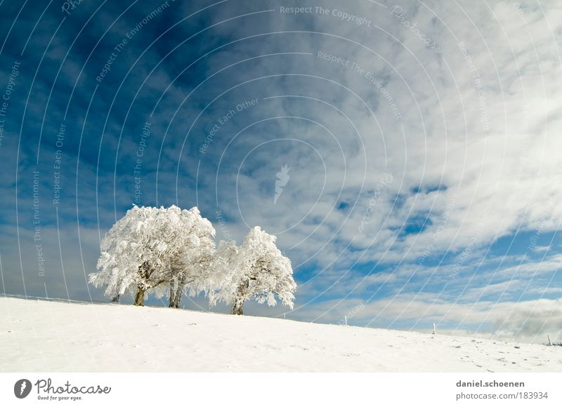 white_2 Copy Space top Copy Space middle Nature Sky Climate Beautiful weather Wind Snow Tree Bright Blue White Horizon Far-off places Black Forest