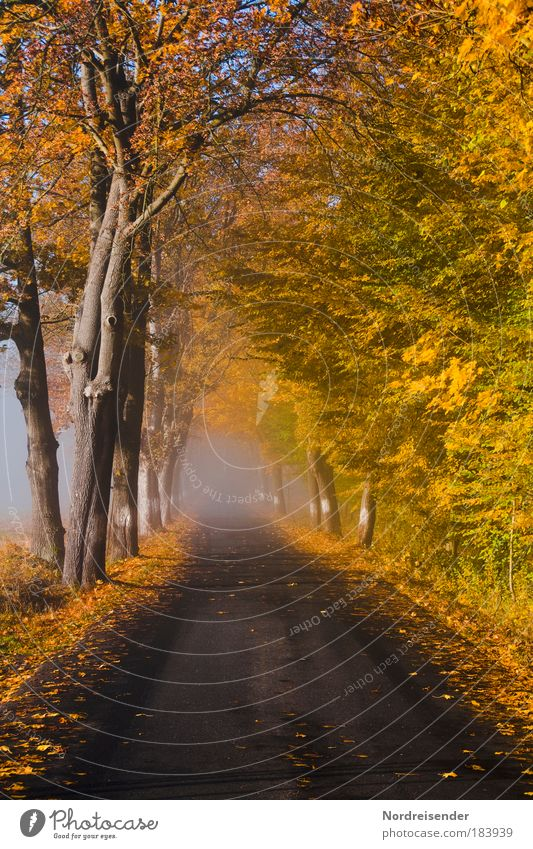 Nature Tree Calm Loneliness Street Life Autumn Emotions Sadness Lanes & trails Fog Weather Hope Threat Observe Natural