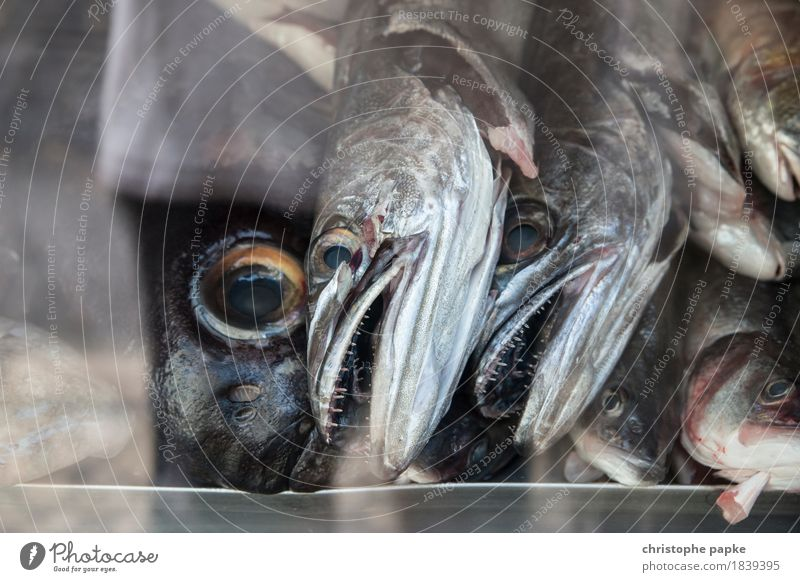 fish heads Animal Farm animal Fish Creepy Slimy Death Fishery Fish eyes Food Chilled Fresh Shop window Fish shop Supermarket Scales Show your teeth Set of teeth