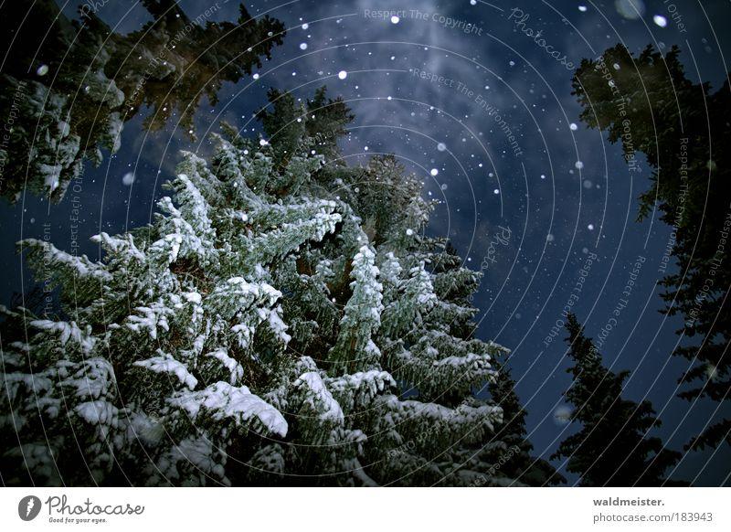 Sky Nature Tree Calm Winter Dark Cold Snow Snowfall Fog Night Forest Smoke Landscape Creepy Ghosts & Spectres