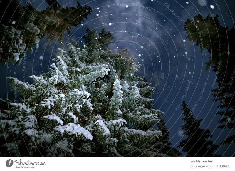Sky Nature Tree Calm Winter Dark Cold Snow Snowfall Fog Night Forest Smoke Landscape Creepy Ghosts & Spectres