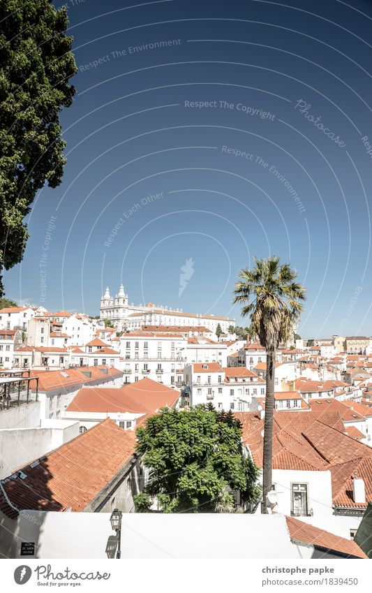Oh how beautiful is Lisbon Vacation & Travel Tourism Trip Freedom Sightseeing City trip Summer Summer vacation Sun Cloudless sky Beautiful weather Plant Tree