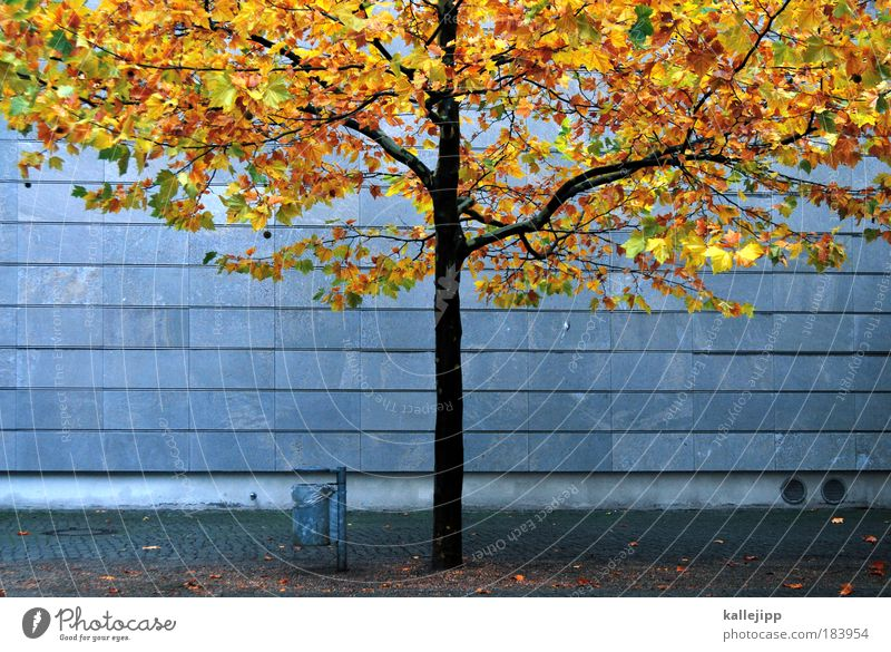 autum in a city Colour photo Multicoloured Exterior shot Copy Space left Copy Space right Morning Day Twilight Long shot Environment Nature Autumn Climate