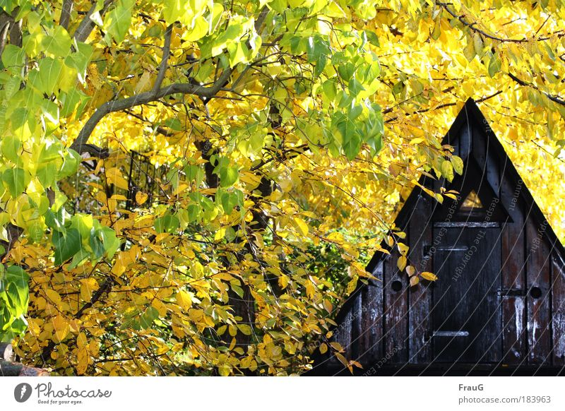Fin hut in yellow Colour photo Exterior shot Day Flash photo Autumn Beautiful weather Tree Garden Hut Safety (feeling of) Calm Relaxation Peace Nature