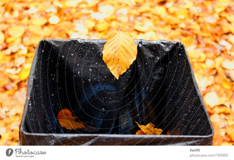 Falling down Deserted Nature Water Autumn Leaf Happiness Brown Yellow Black mischievous Gale Drops of water Wet Trash container Illuminate