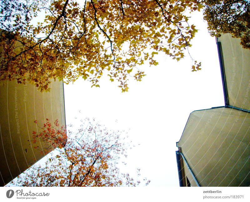Friedenau 25 Backyard House (Residential Structure) Building Wall (barrier) Fire wall Tenant Landlord Sky Morning Dawn Sun Bright Dazzle Tree Leaf Autumn leaves