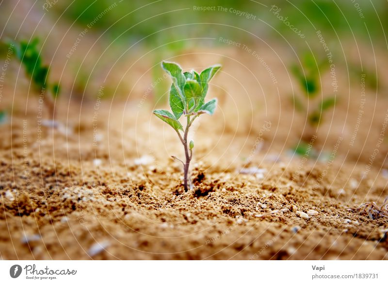 ittle green plant growing in the desert Summer Garden Gardening Environment Nature Landscape Plant Earth Sand Spring Grass Leaf Foliage plant Agricultural crop