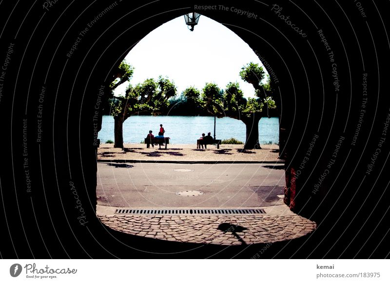 Human being Tree Relaxation Group Sit River Light Asphalt Gate Beautiful weather Door River bank Rhine Town