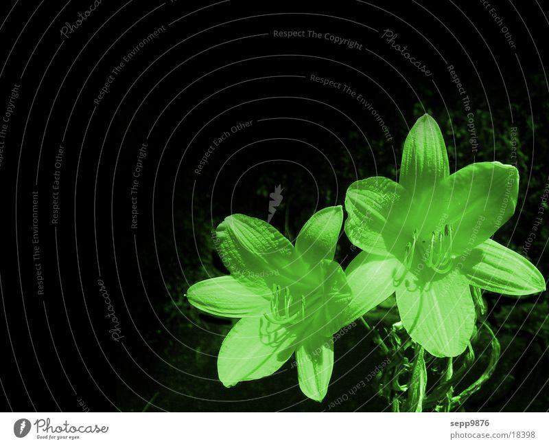 green flower Flower Green