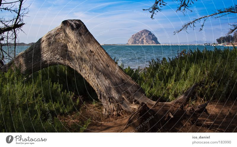California - Morro Bay Far-off places Freedom Summer Beach Ocean Island Waves Environment Nature Landscape Plant Water Clouds Horizon Beautiful weather Tree