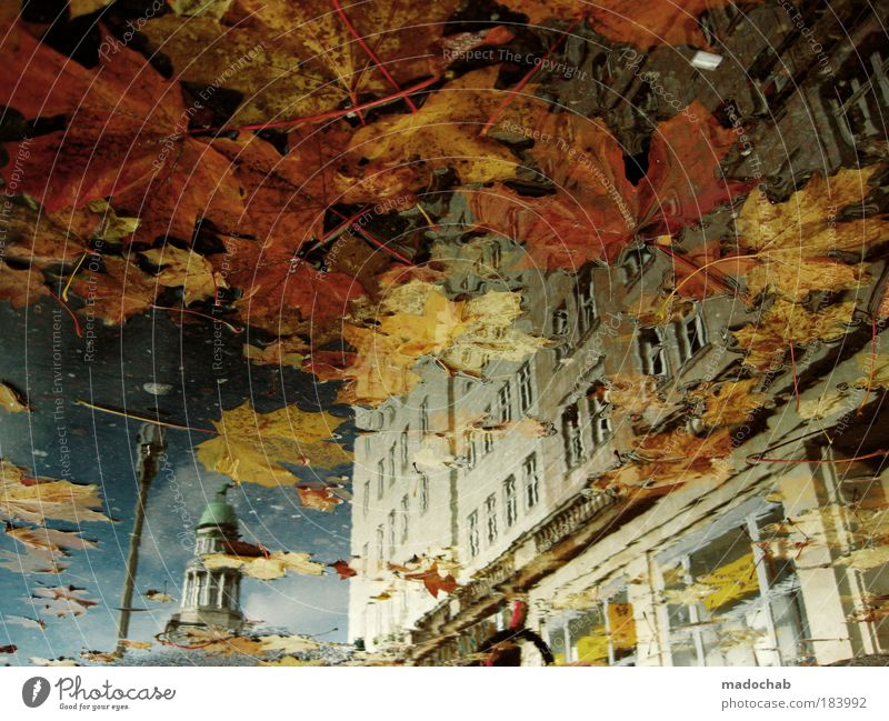 City Beautiful Colour Relaxation Leaf Warmth Autumn Emotions Berlin Art Exceptional Moody Weather Contentment Authentic Esthetic