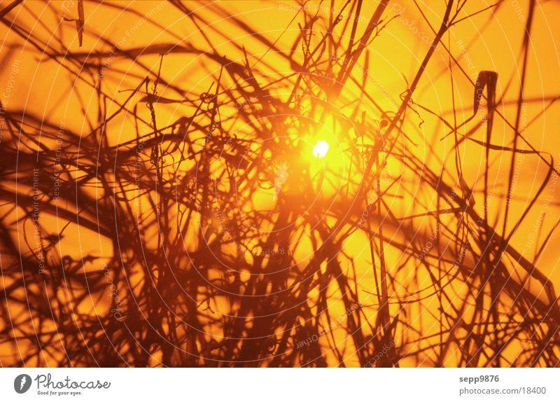 Nice evening Grass Sunset Moody Evening Nature