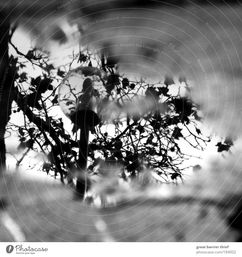 He saw, photographed and left... Black & white photo Exterior shot Experimental Deserted Day Contrast Reflection Blur Autumn Stone Concrete Water Discover