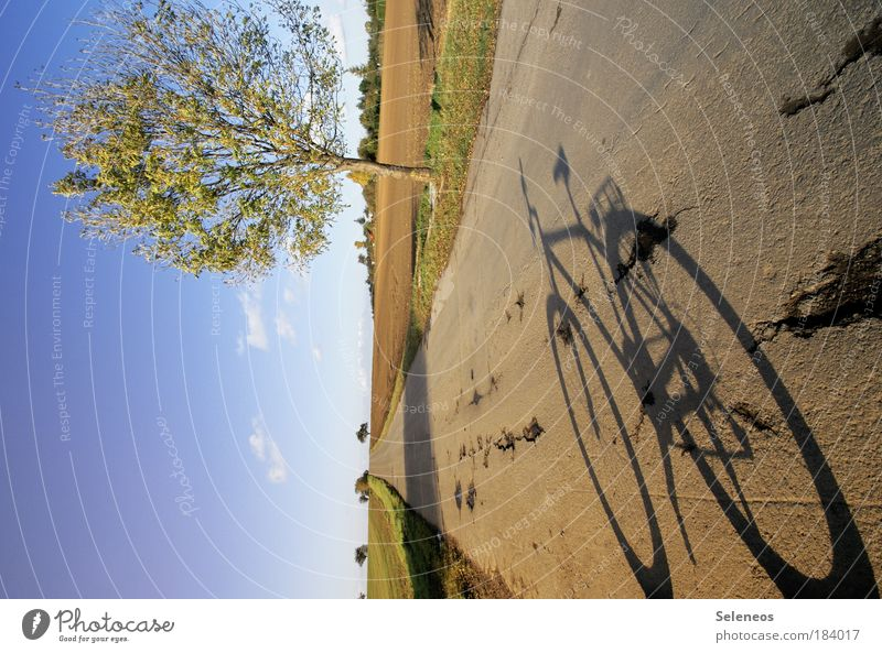 Sky Nature Old Tree Joy Vacation & Travel Street Relaxation Freedom Autumn Landscape Environment Bicycle Field Horizon Leisure and hobbies