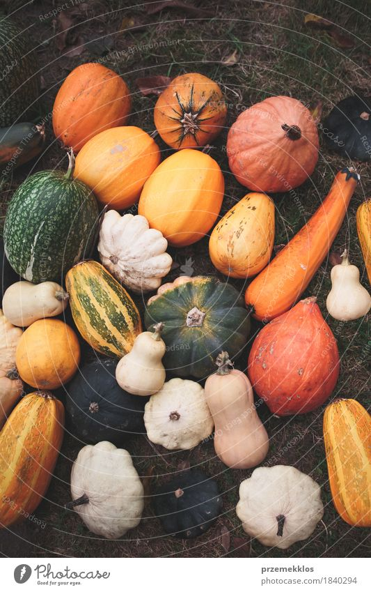 Crops of colorful squashes on a ground after harvesting Nature Green Yellow Autumn Garden Food Brown Fresh Seasons Vegetable Farm Harvest Rural Raw Rustic
