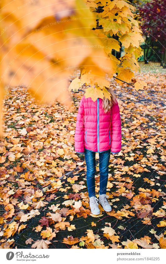 Girl hidden behind yellow autumn leaves in a park Beautiful Garden Nature Autumn Tree Leaf Foliage plant Park Stand Bright Multicoloured Yellow Colour Autumnal