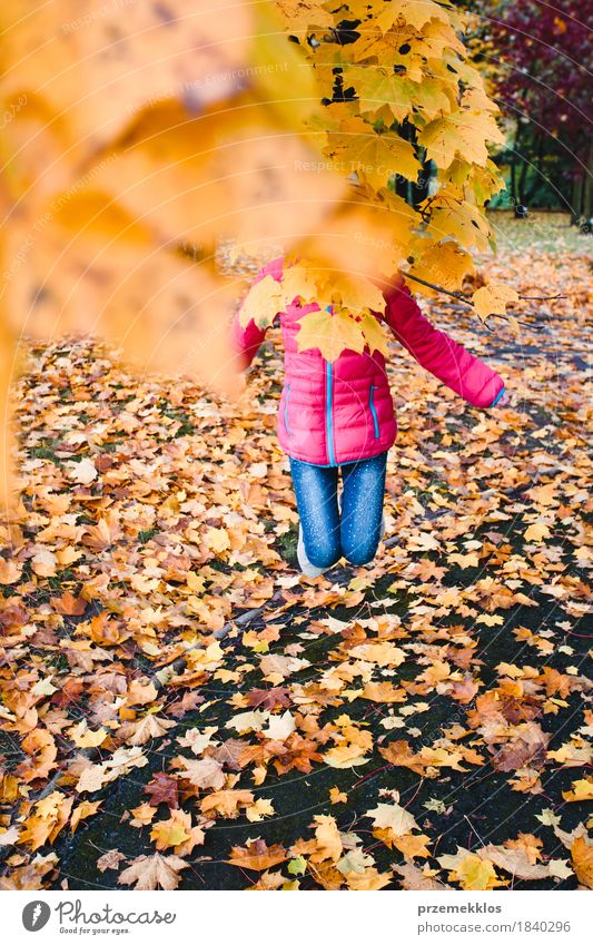 Girl jumping behind yellow autumn leaves in a park Lifestyle Beautiful Garden Youth (Young adults) 1 Human being 8 - 13 years Child Infancy Nature Autumn Tree