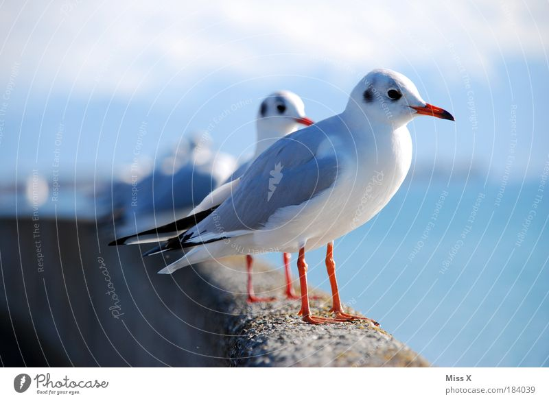 Nature Water Ocean Beach Vacation & Travel Animal Wall (barrier) Bird Coast Sit Group of animals Vantage point Wing Deserted Curiosity Wild animal