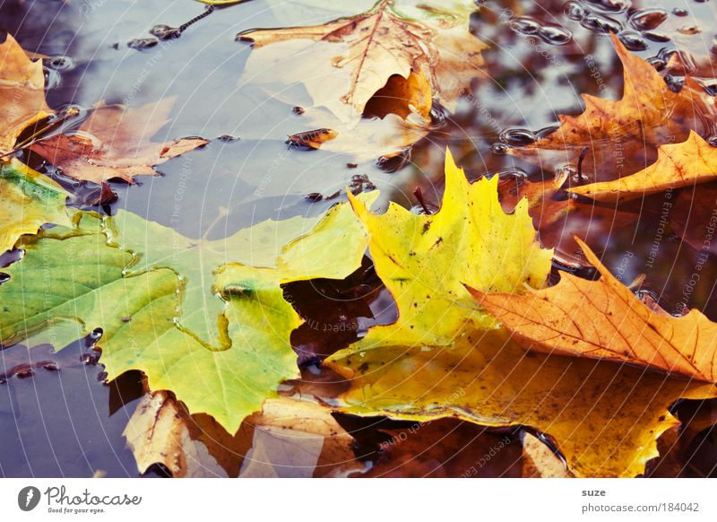 Nature Water Old Leaf Autumn Emotions Landscape Moody Plant Environment Wet Time Authentic Seasons Puddle Autumn leaves