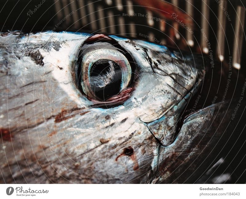 Appreciation of a soul Tuna fish Crate Authentic Glittering Large Cold Wet Colour photo Exterior shot Close-up Deserted Day Dead animal Fish eyes
