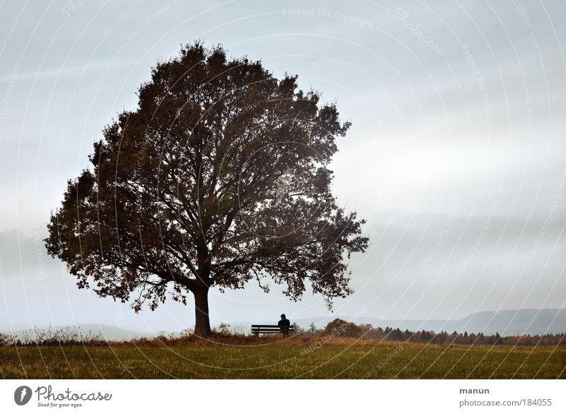 Human being Nature Man Tree Relaxation Loneliness Calm Landscape Far-off places Adults Meadow Autumn Horizon Fog Contentment Sit