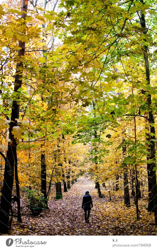 Blue cap alone in the forest Young woman Youth (Young adults) 1 Human being Nature Autumn Forest Going Dream Hiking Threat Dark Large Natural Yellow Green Calm