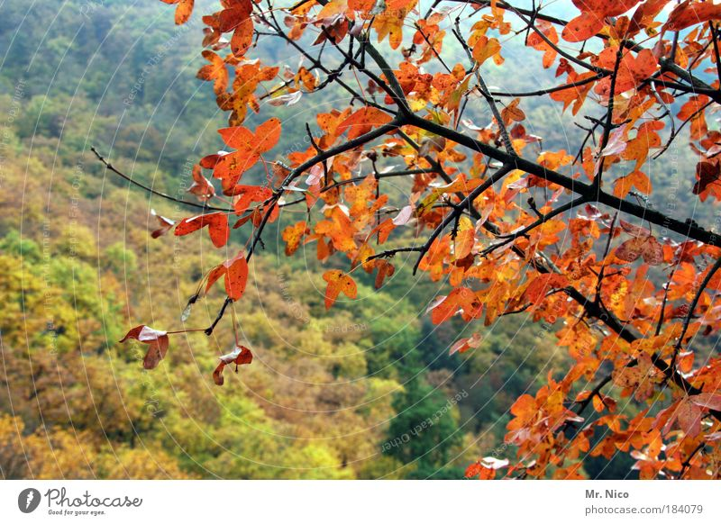beautiful day Sunlight Environment Nature Landscape Autumn Climate Climate change Weather Tree Forest Hill Joie de vivre (Vitality) Beautiful Relaxation Freedom