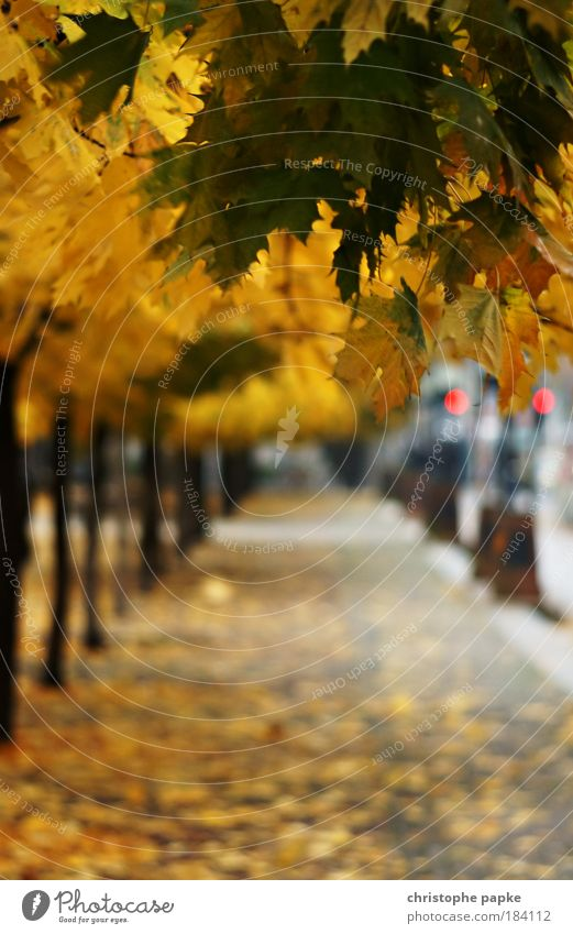 Berlin Late Autumn (2009) Bad weather Tree Leaf Capital city Deserted Gendarmenmarkt Lanes & trails Old To dry up Wet Yellow Colour photo Exterior shot